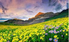 Flower Valley Wallpaper by Wallpaper Mountain Flower Of Nature