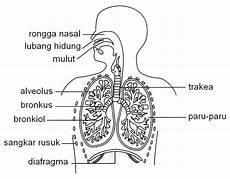 Sains Smasra Tingkatan 3 Respirasi