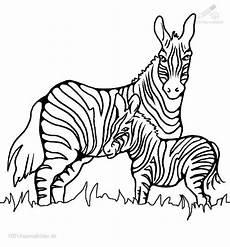 Bilder Zum Ausmalen Zebra Grosse 54 80 Kb 15792 X Angesehen