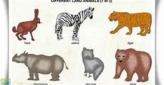 Gambar Hewan Dalam Bahasa Inggris Sepertiga