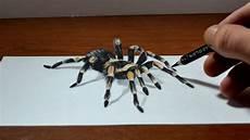 Amazing Anamorphic Tarantula Drawing Trick 3d
