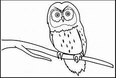 35 Sketsa Burung Merpati Hantu Merak Kakak Tua