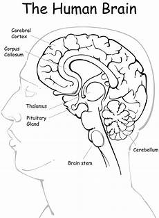 image result for free human anatomy coloring pages pdf anatomy coloring book coloring pages
