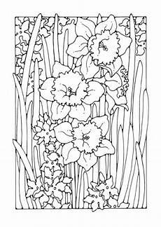 malvorlage narzisse flower coloring
