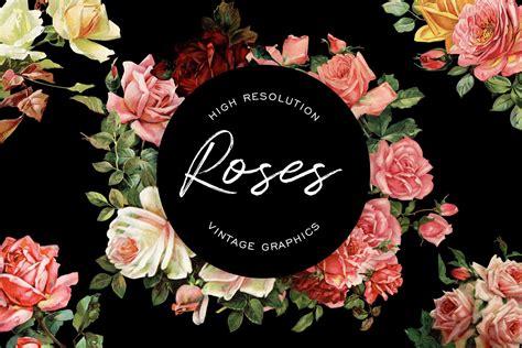 High Resolution Vintage Rose Graphics