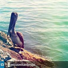 simbolos naturales de maracaibo maracaibo on twitter quot buch 243 n del lago uno de los s 237 mbolos naturales del estado zulia