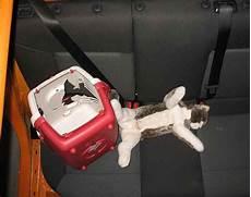 214 amtc crashtest tiere im auto richtig transportieren