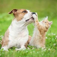 revue april assurance animaux avis et assurance animaux