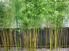 how to kill bamboo southern living