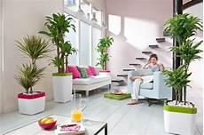 feng shui wohnzimmer pflanzen beautiful indoor plants to decorate your home home decor