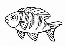 ausmalbilder fische 19 ausmalbilder tiere