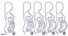 development stages of pregnancy