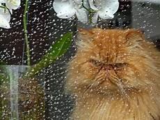Bei Regen Bekomm Ich Schlechte Laune Foto Bild