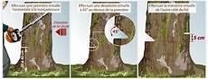 couper un arbre 12261 comment couper un arbre ooreka