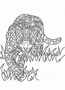 Bilder Zum Ausmalen Insel Der Regenwald Shop Postkarte Zum Ausmalen Jaguar