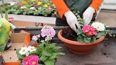 fiori e creare una composizione con fiori e piante primaverili