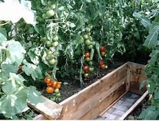 tomaten im hochbeet hochbeet tomaten