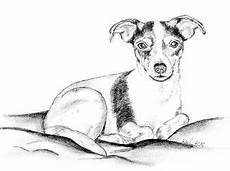 kleurplaat russel 35 besten terrier