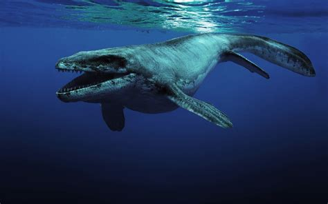 Mosasaurus Vs Megalodon