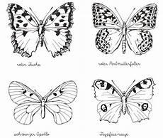 Ausmalbild Schmetterling Pfauenauge Illustration Tagfalter Schmetterling Zeichnen