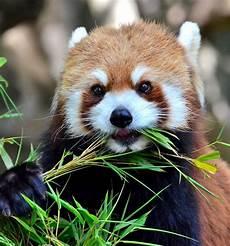 34 super cute animals funoramic