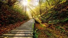 Nature Path 4k Wallpaper by Wallpaper Park Autumn Path Trees Sun Rays 3840x2160