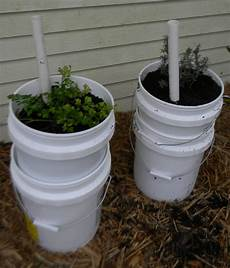 5 Gallon Container Gardening