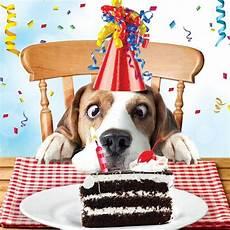 Beagle Luxury Glitter Birthday Greeting Card