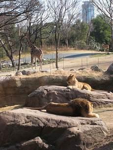 am zoo tennōji zoo