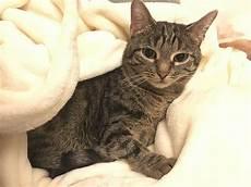 darf vermieter katze verbieten darf vermieter katze verbieten 4 gr 252 nde f 252 r ein katzenverbot
