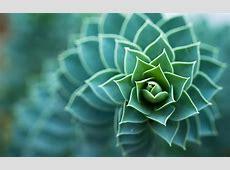 macro, Plants, Succulents, Depth Of Field, Nature