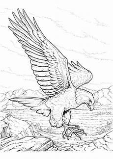 Ausmalbilder Zum Ausdrucken Natur Ausmalbild Adler In Der Natur Zum Ausdrucken