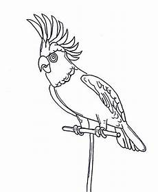awesome parrot coloring page print