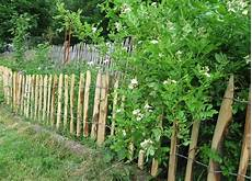 die hecke natuerlicher zaun und gartenzaun hecke hunde hundezaun zaun