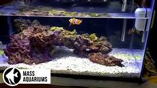 Aquarium Auf Maß - how to dip corals 10 gallon reef dipping zoanthids to