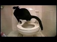 Chat Qui Fait Caca Aux Toilettes Par Buzztub