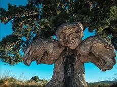 strom anschließen le votez pour le plus bel arbre d europe journal l union