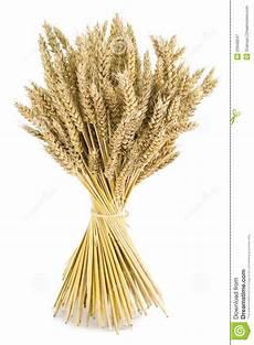 wheat bouquet stock image image of studio harvesting
