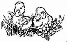 entenbabys blumen ausmalbild malvorlage tiere