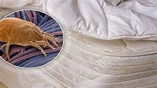 acari da materasso come scegliere il giusto materasso