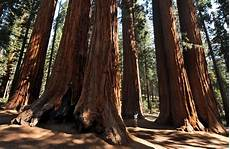 eqoi7a arbor day 2016 facts quotes and activities to celebrate trees