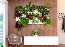 giardino verticale fai da te giardini verticali realizzazione crea giardino