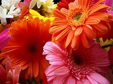 view all wallpapers flowers wallpapers