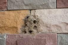 wespen im mauerwerk wespen im mauerwerk 187 sind sie ein problem