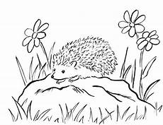 Ausmalbild Igel Gratis Hedgehog Coloring Page Starts For