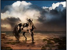 Free Wild Horse Desktop Wallpapers   WallpaperSafari