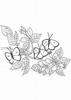 Ausmalbilder Schmetterling Pdf Kostenlos Ausmalbilder Schmetterlinge 3 Schmetterlinge Malvorlagen