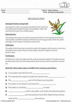 primaryleap co uk life cycle of a plant worksheet plant life cycle plant life cycle