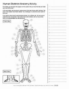 human skeleton anatomy activity 5th 10th grade worksheet
