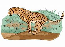 Kostenlose Malvorlage Gepard Gepard Ausmalbilder Kostenlos